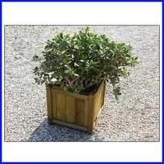 Fioriera in legno cipro mini 40x40x40hcm